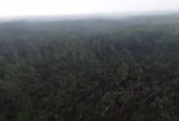 """Житомирщиною пронісся буревій - понад 100 гектарів лісу """"знесло""""за лічені хвилини (відео)"""