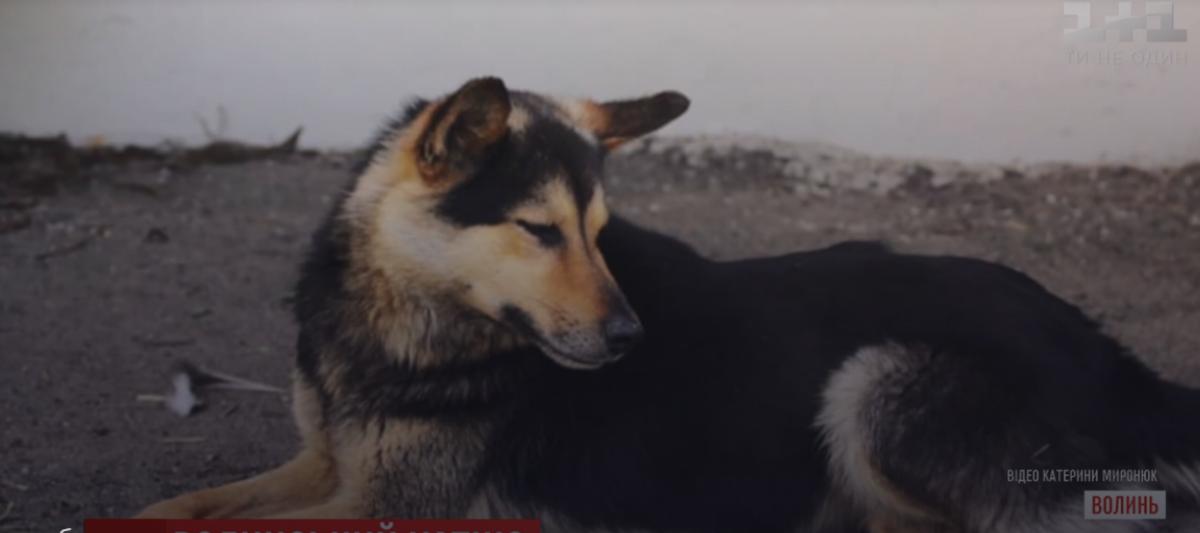 Пес уже неделю ждет своего хозяина \ скриншот с видео