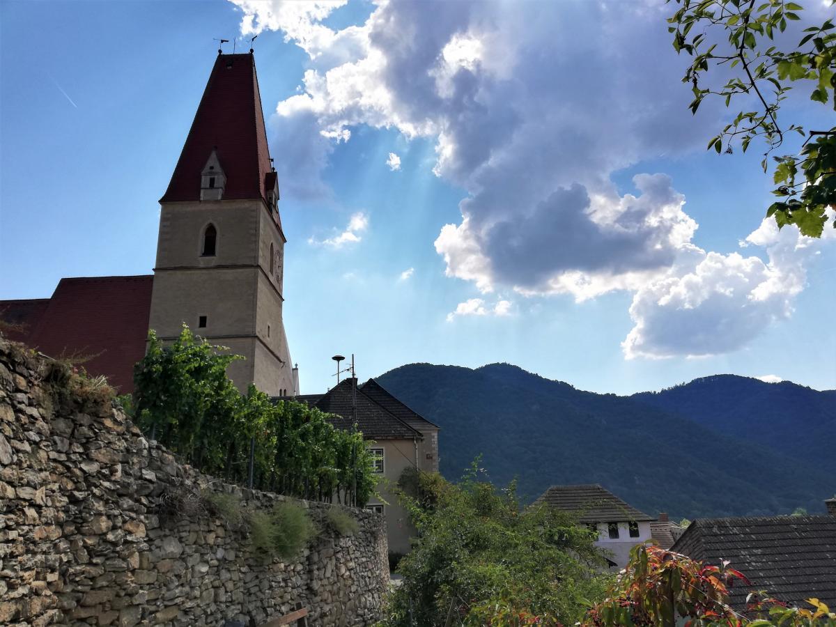 Долина Вахау уся вкрита виноградниками / Фото Марина Григоренко