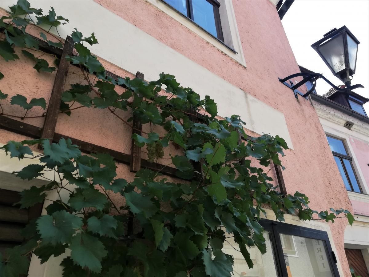 Виноград тут всюди / Фото Марина Григоренко