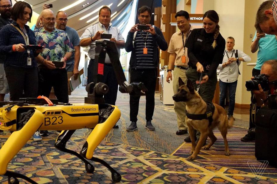 Робот Bostom Dynemics поиграл с настоящим псом / фото twitter.com/jjvincent