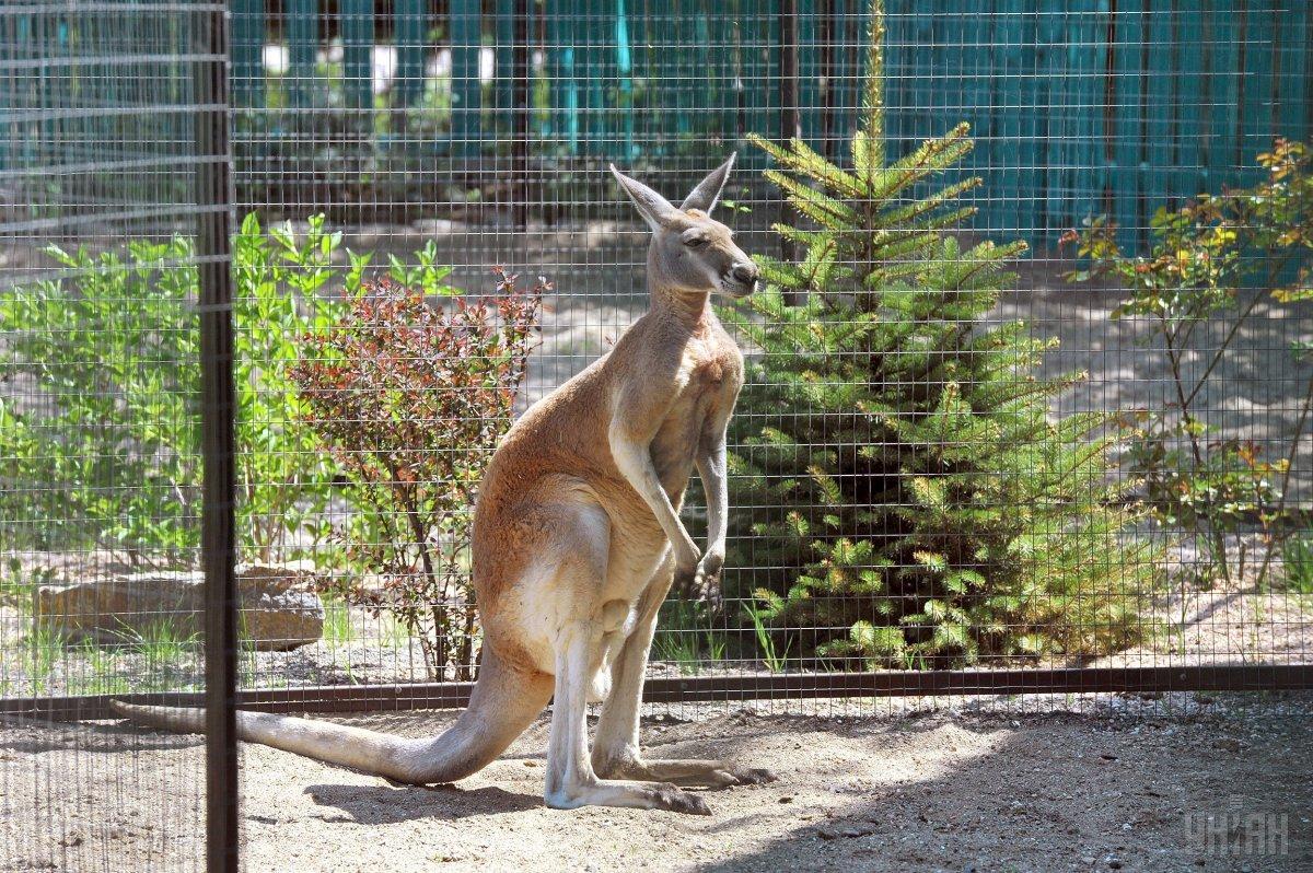 В Австралию идет холод / Фото УНИАН