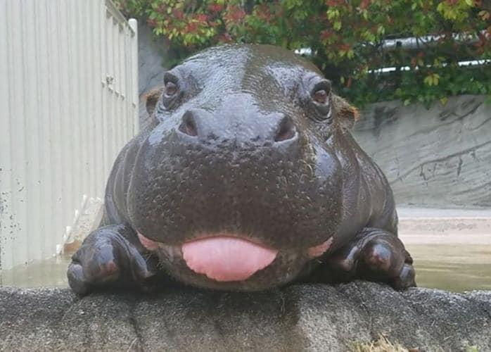 Зоопарк на Киевщине пополнился животным из Франции / Тупальський Сергей