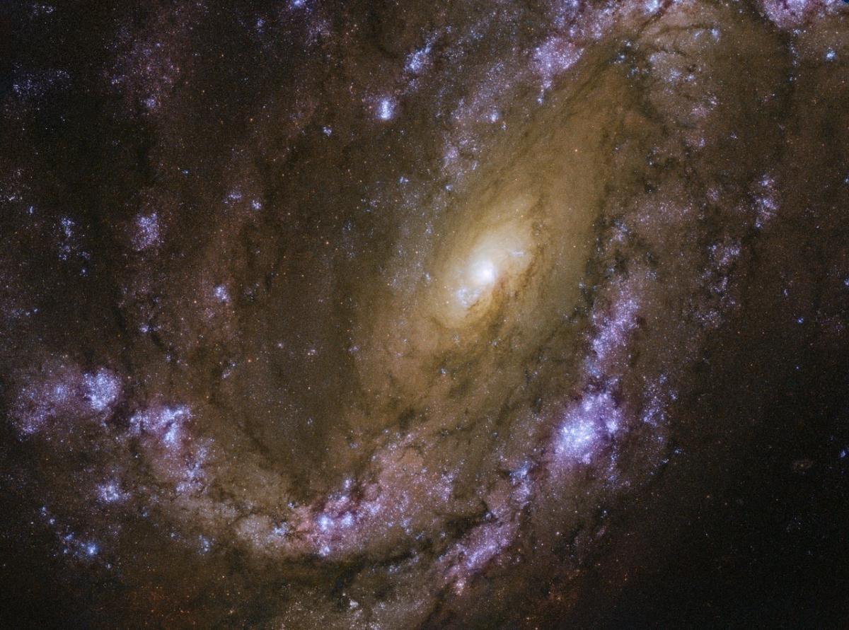 ТелескопHubble сделалснимок галактики NGC 4051 / фото ESA/Hubble & NASA, D. Crenshaw and O. Fox