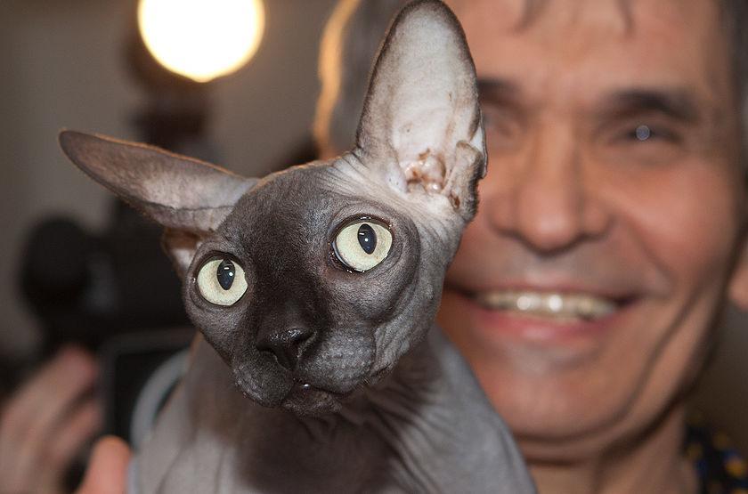 Сын Алибасова объявил о премии в 800 тысяч рублей за пропавшую кошку/ фото: newsland.com