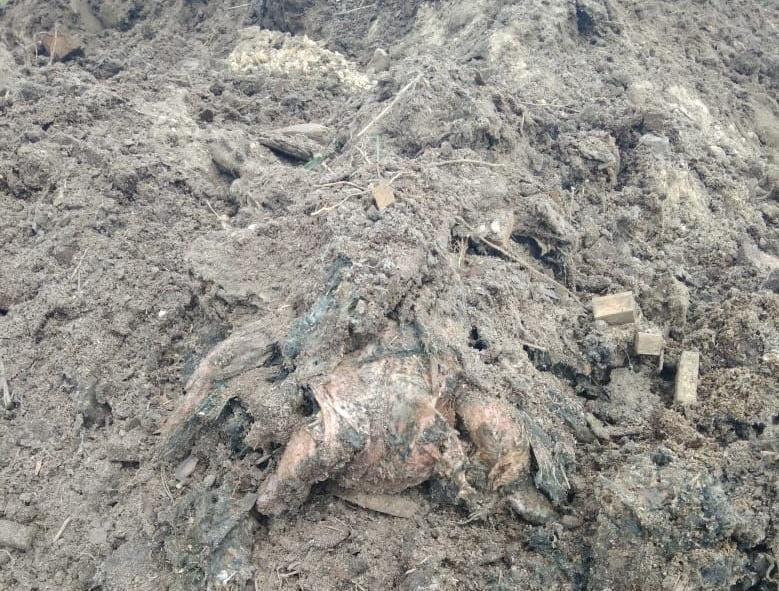 """В прошлом году руководство агрохолдинга """"Агромарс"""" обвинили в организации птичьего могильника в Киевскойобласти / фото gp.gov.ua"""