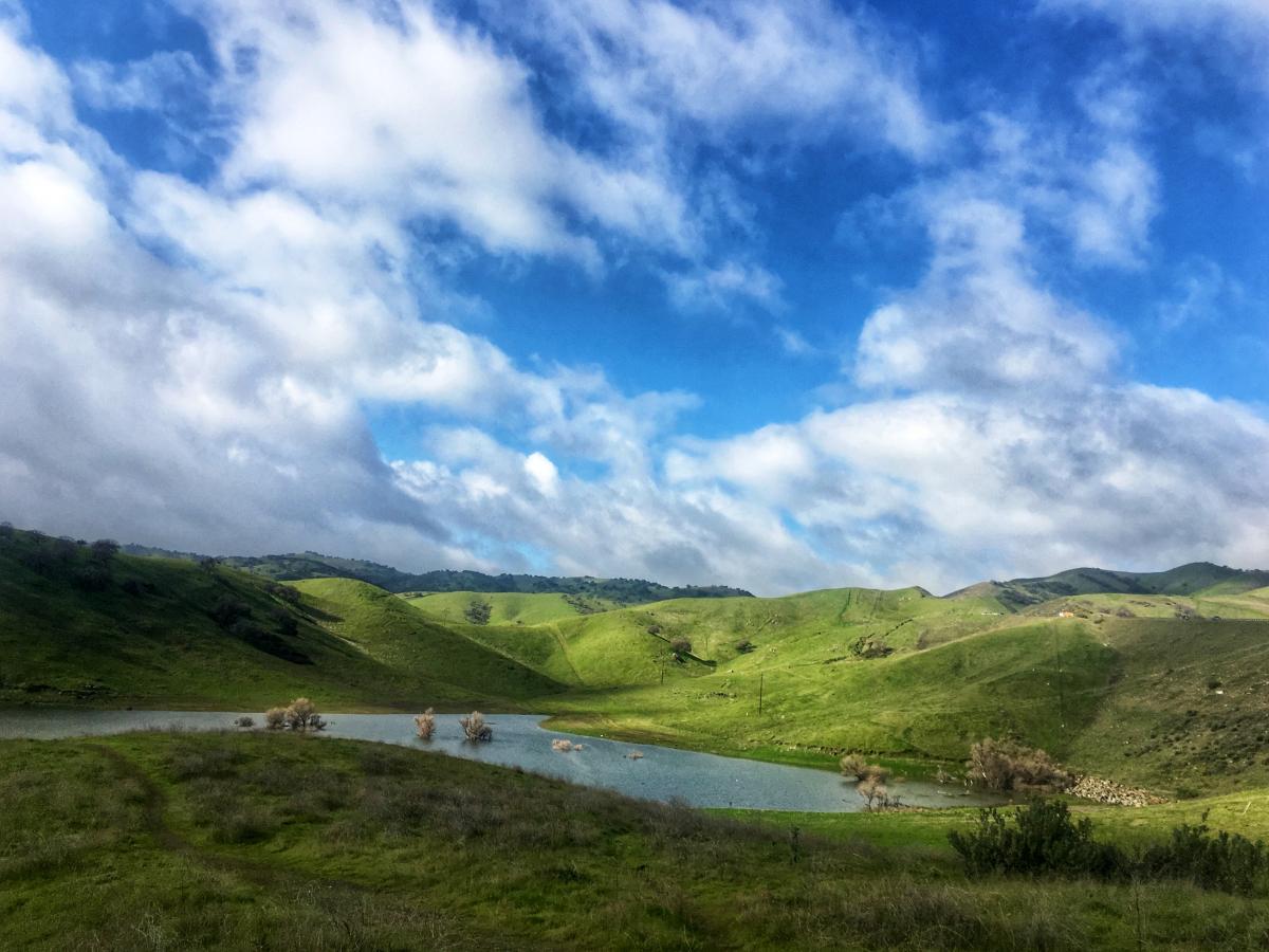 Каліфорнія – дуже зелена більшу частину року / Фото Ольга Семиляк