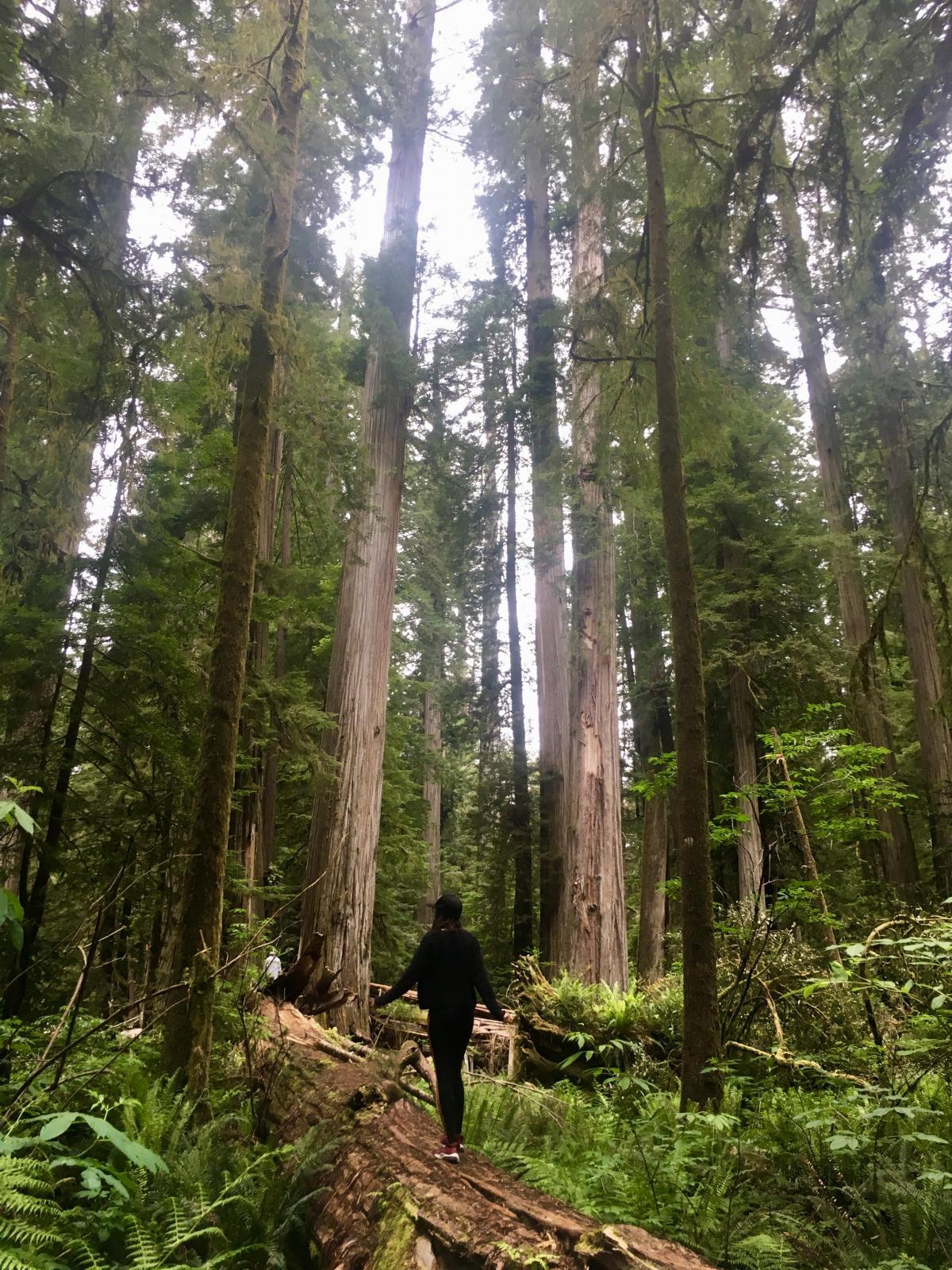 Каліфорнія багата на природні красоти / Фото Ольга Семиляк