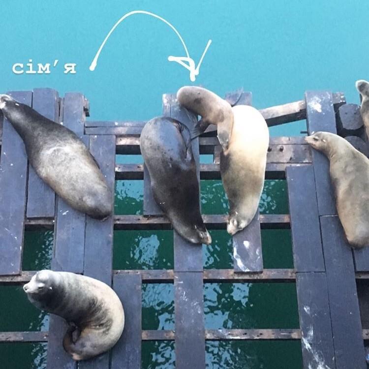Морські котики на Пірсі 39 у Сан-Франциско / Фото Ольга Семиляк
