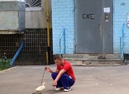Мужчина обустроил для уточки место на балконе/ фото: Комментарии.UA.Харьков