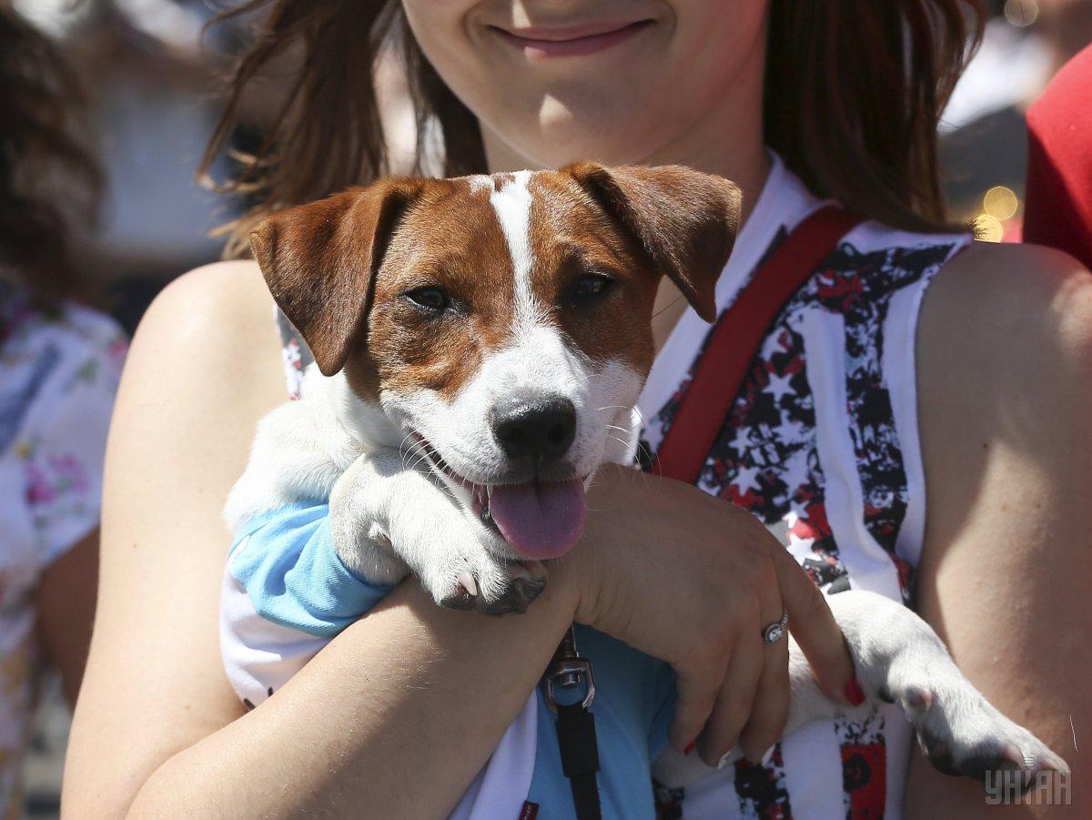 У цей день світ святкує Міжнародний день стерилізації тварин / УНІАН
