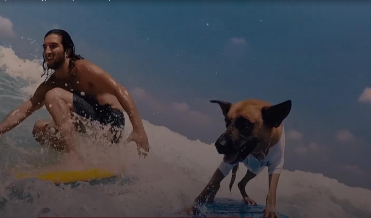 Собаку Полиедва выманивают из воды / скриншот