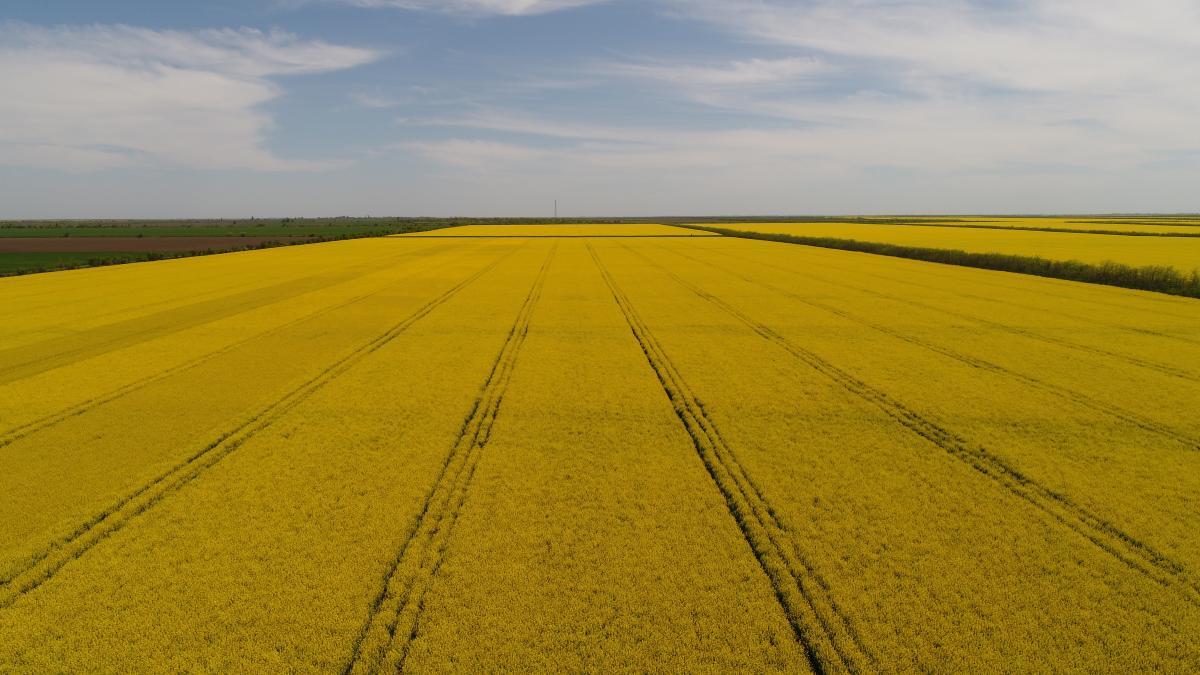 Украинский аграрный секторуже стал немыслим без применения новейших инженерных разработок / УНИАН