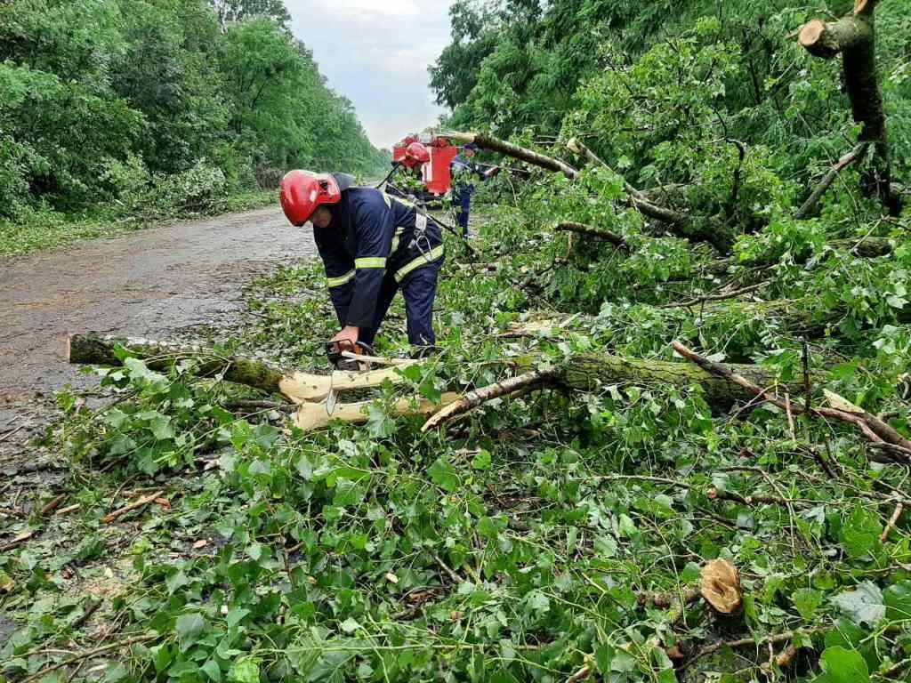 На Дніпропетровщині внаслідок падіння дерев постраждали дві людини / фото ДСНС