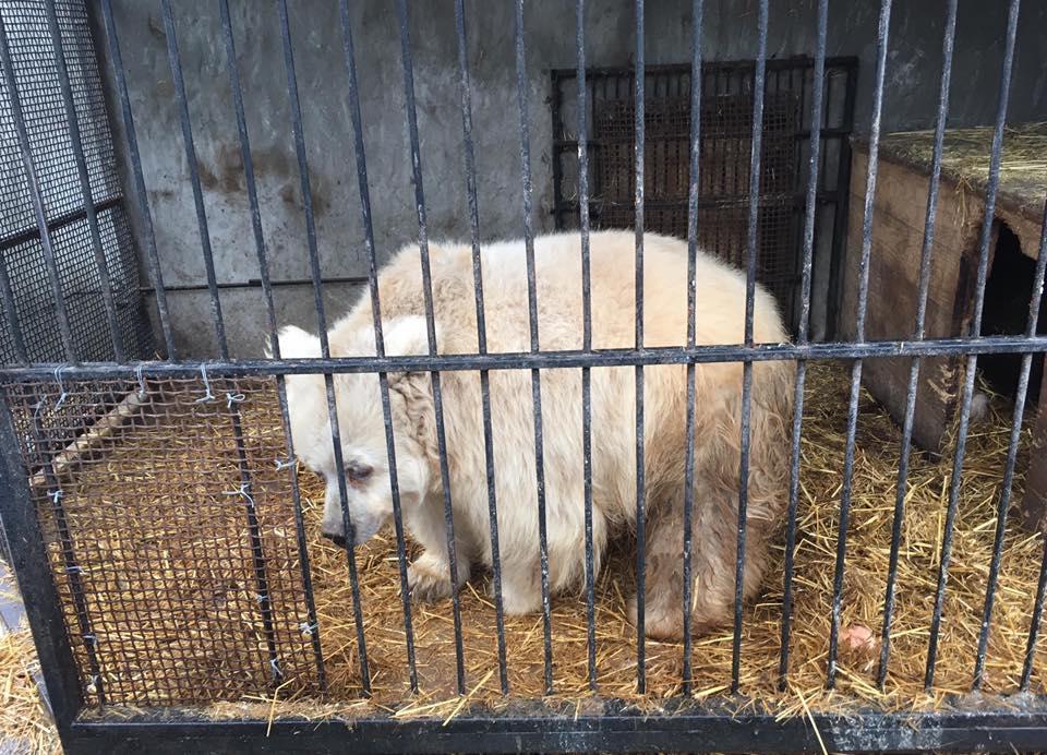 Медведицу Чаду 9 лет назад покинул владелец / фото Facebook UAAA