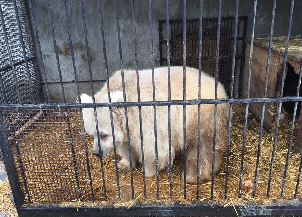Медведица Чада нашла новый дом / фото Facebook UAAA