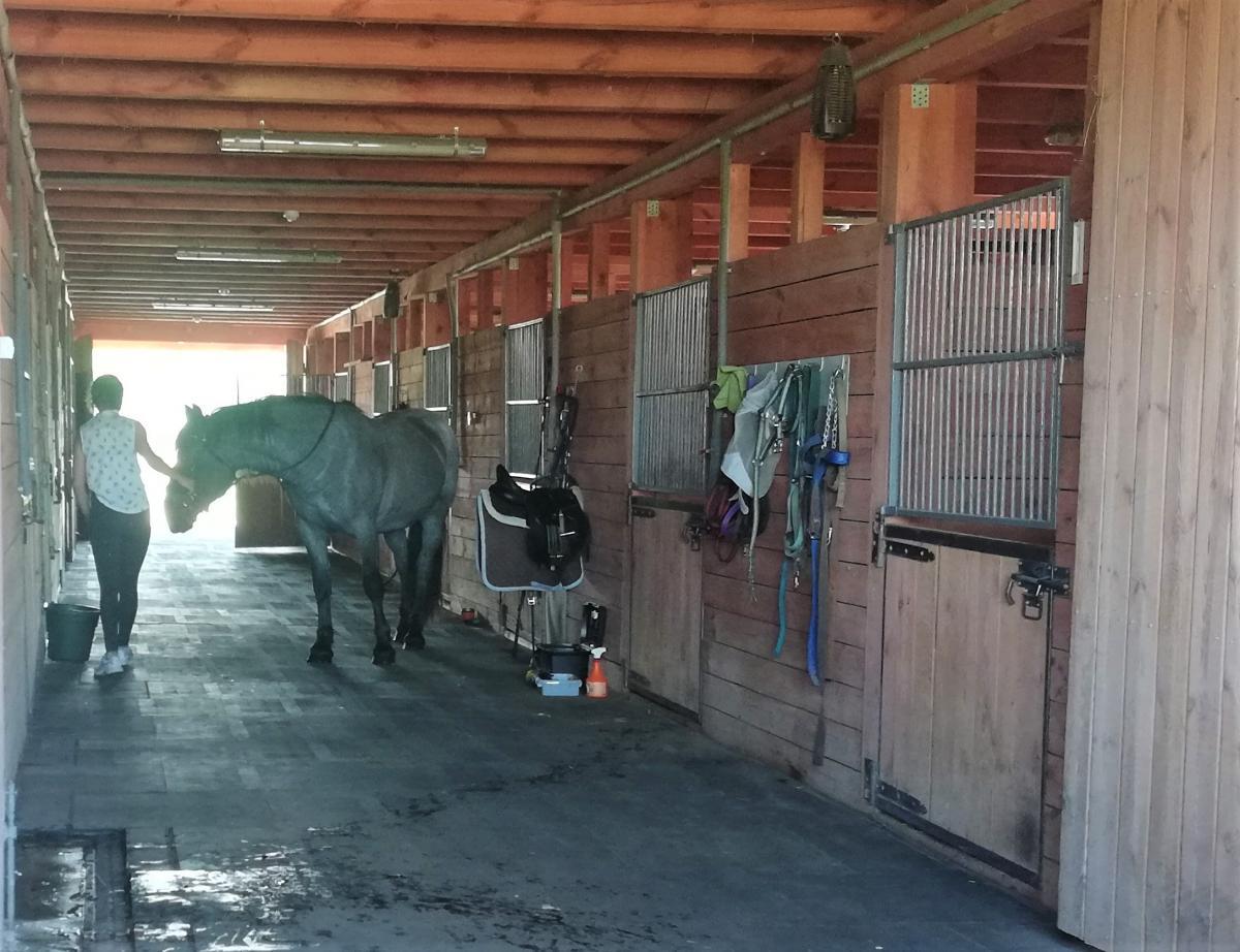 """В парке """"Беремицкое"""" можно покататься на лошадях / Фото Марина Григоренко"""