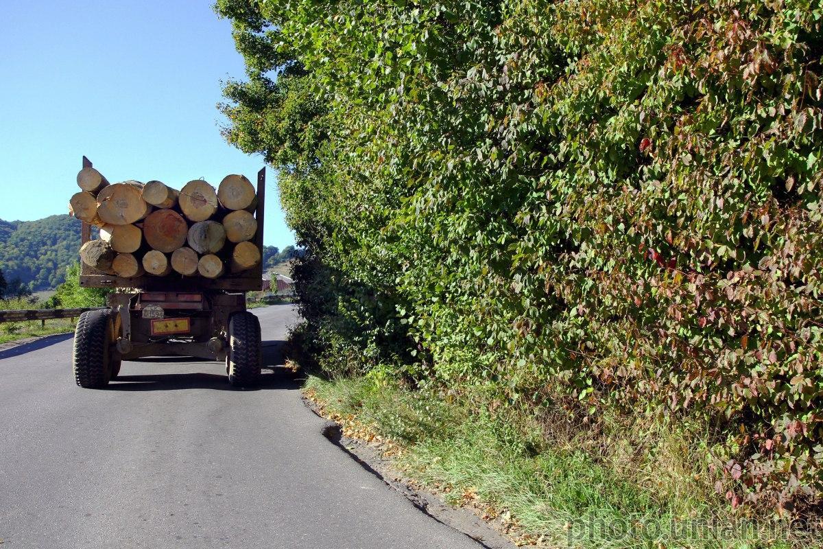 Офис президента: мораторий на экспорт леса-кругляка неэффективен и должен быть пересмотрен/ фото УНИАН
