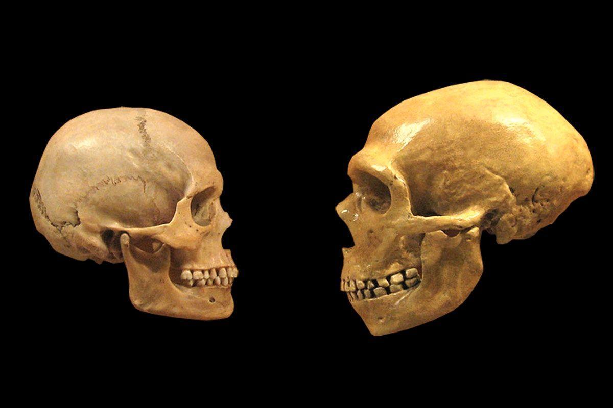 Задня частина черепа виявилася закруглена, що характерно для представників H. sapiens, а не неандертальців / фото: Naked Science