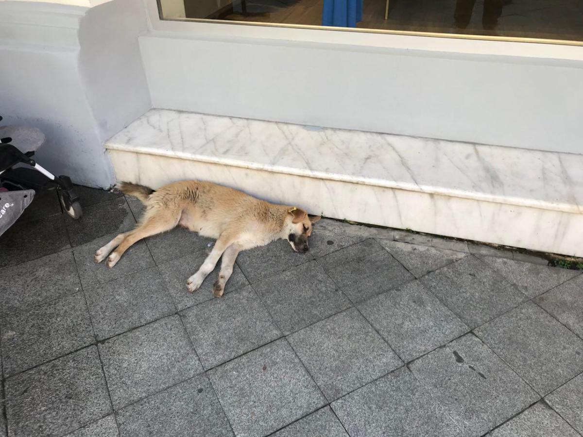 Собаки без хозяев - полноценные жители города