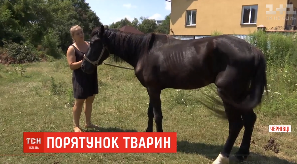 В Черновцах зоозащитники спасли от забоя нескольких лошадей / Скриншот - ТСН