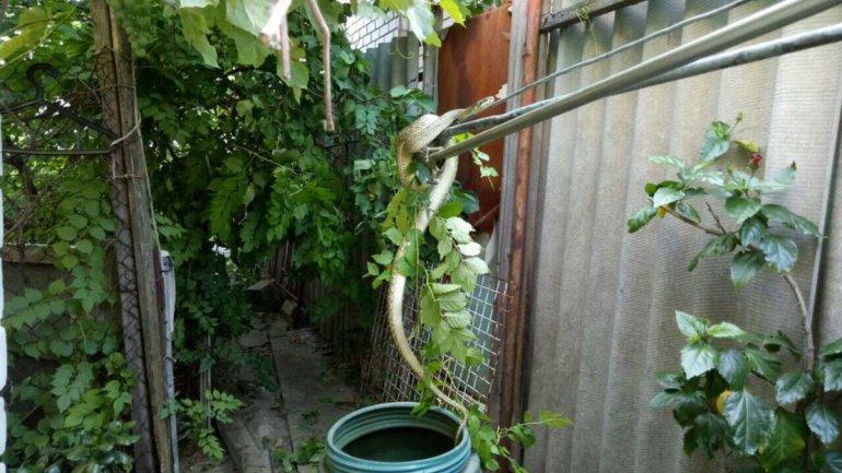 Пресмыкающееся нашли на дереве возле дома / фото 34.ua