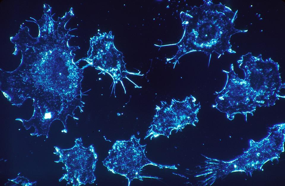Вчені розробили роботів для лікування ракових пухлин / фото pixabay.com