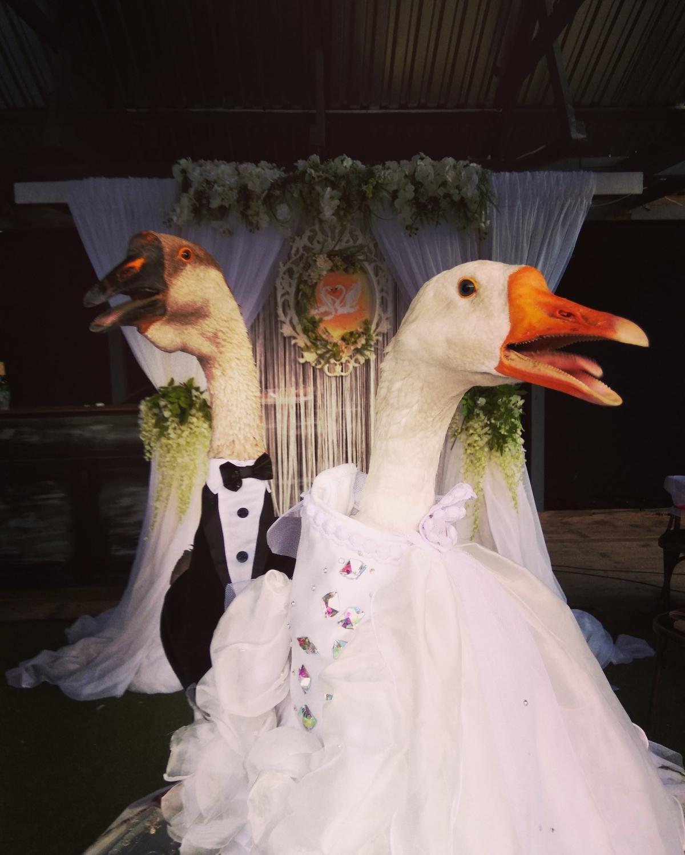 Жених был в костюме с бабочкой, невеста -в белом свадебном платье / фото vk.com/gusin_gus