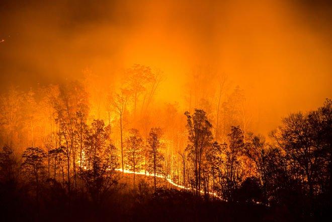 Сибирь гибнет в огне / фото twitter.com/shadowerufu
