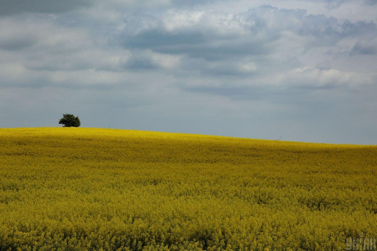 Мораторий на продажу земли отменят до конца года / фото УНИАН