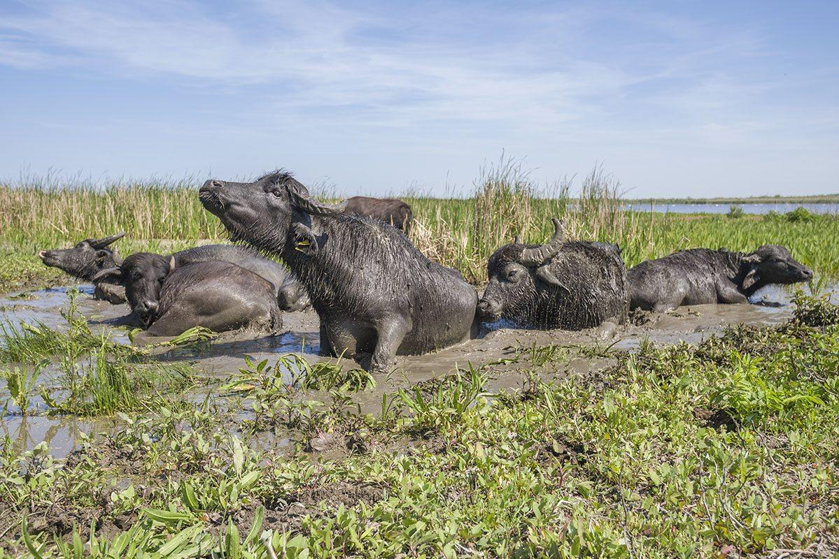 Первое стадо насчитывало 7 голов / фото: Rewilding Ukraine