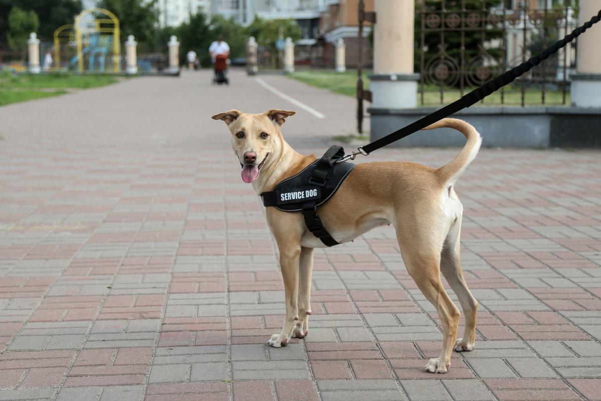Путешествия с собаками имеют ряд нюансов и сложностей / Фото УНИАН