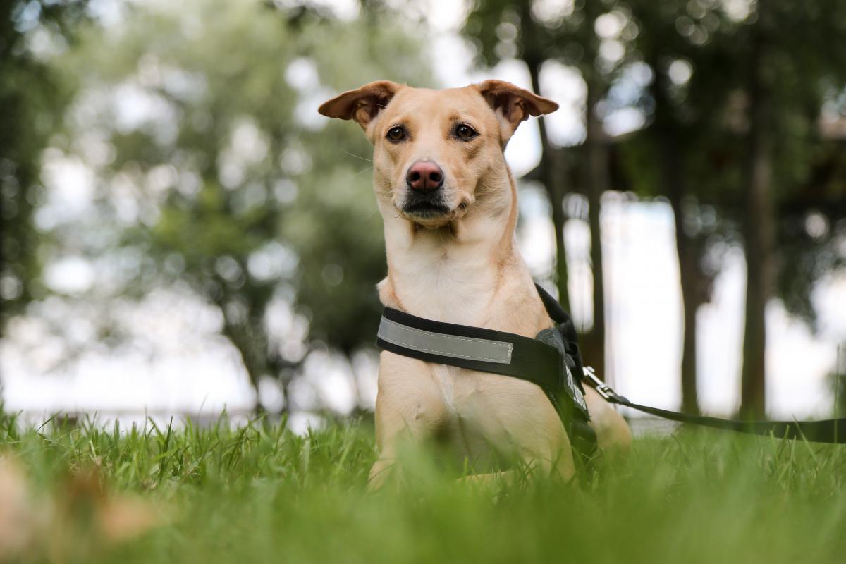 Спасенная в Индии собака Чапати теперь популярный Instagram-блогер / Фото УНИАН
