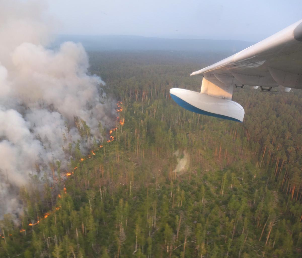 Ситуация с пожарами в Сибири ухудшается, утверждают экологи / REUTERS