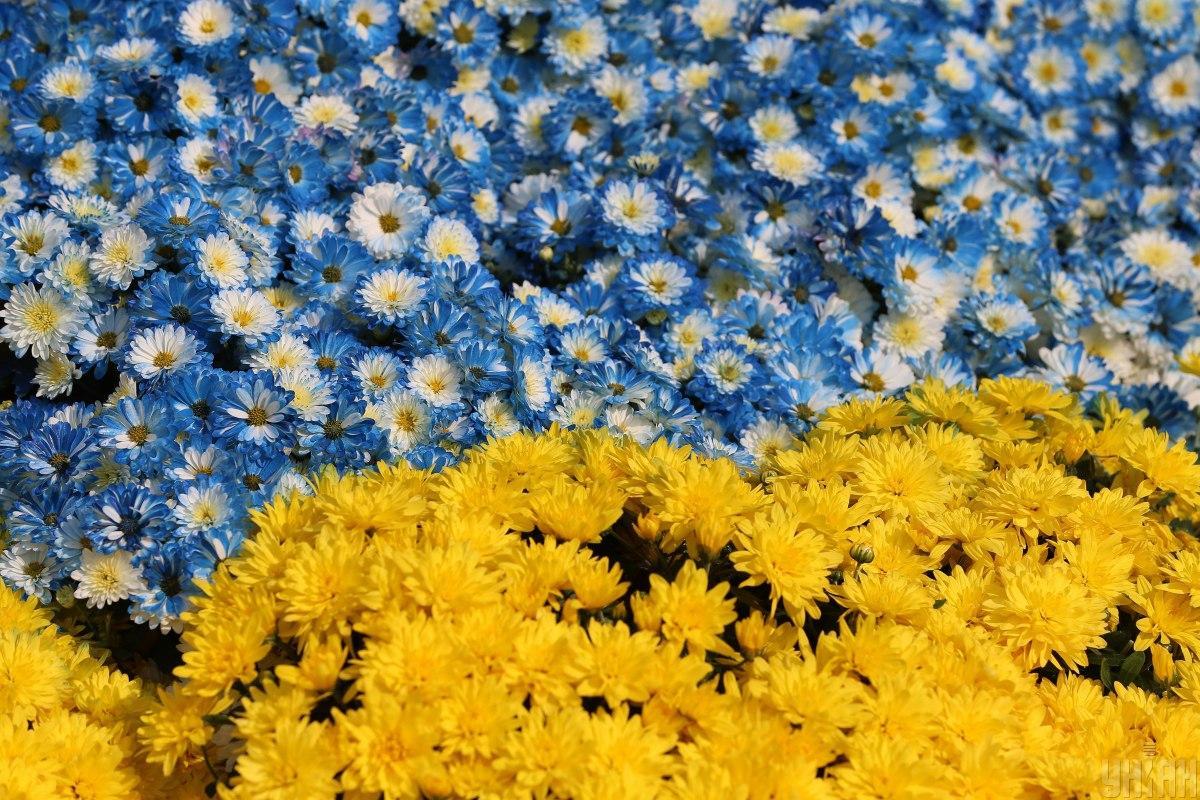 Новая выставка цветов на Певческом поле будет открыта с 16 августа по 15 сентября/ Фото УНИАН