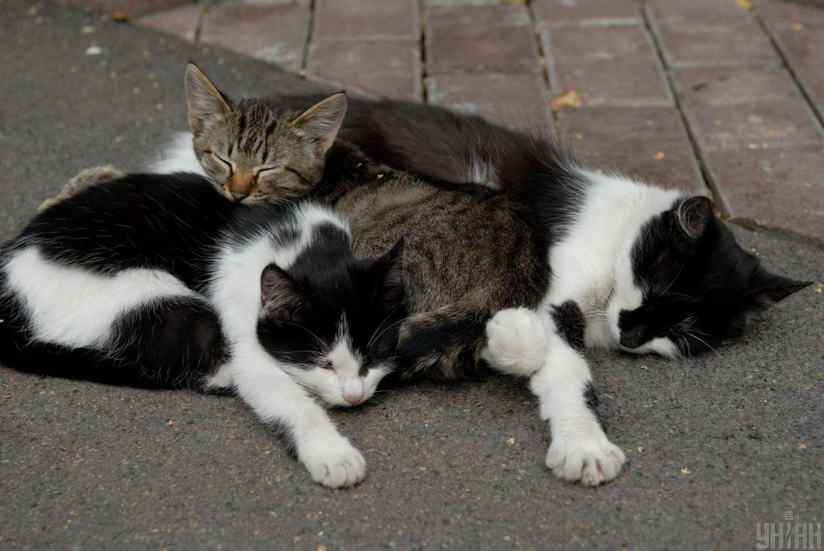 В результате инцидента погибли 8 котов / фото УНИАН