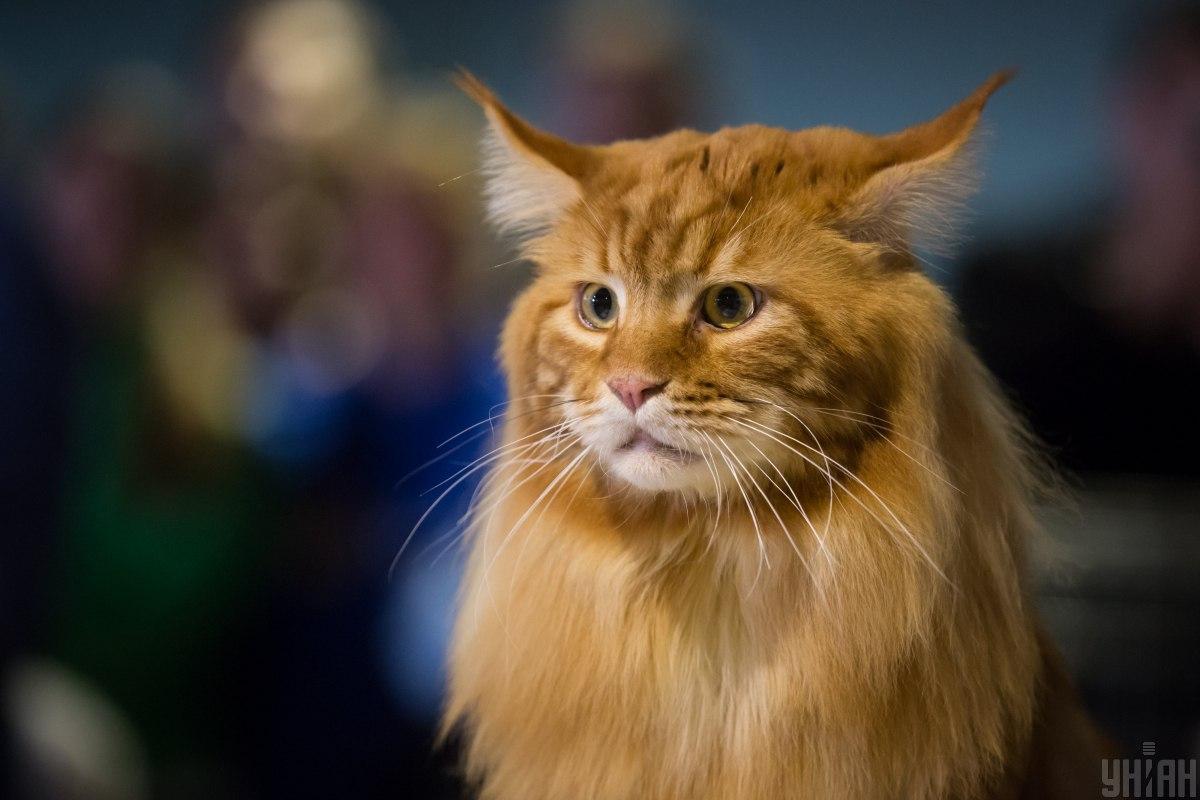 8 августа отмечают Международный день кошек / фото УНИАН