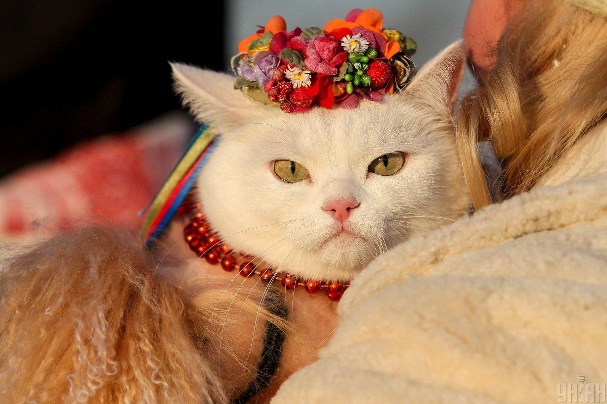 У Польщі відзначають День кота / фото УНІАН