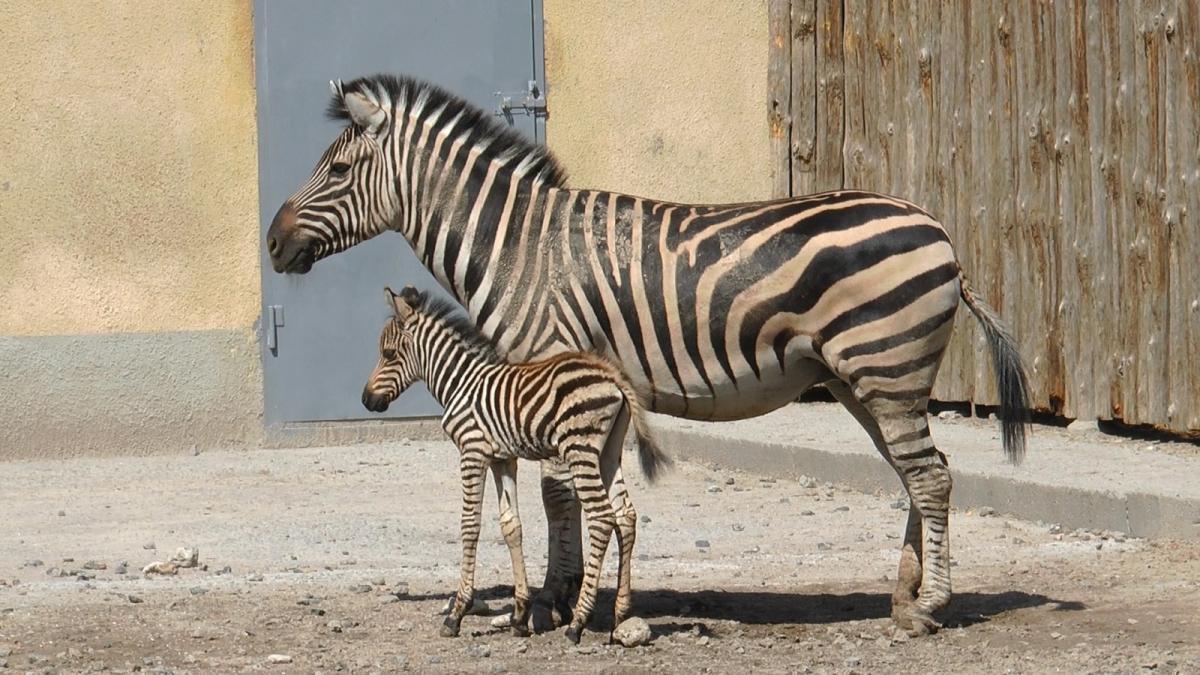 Зоопарк приглашает познакомиться с детенышем/ фото: мэрия Одессы