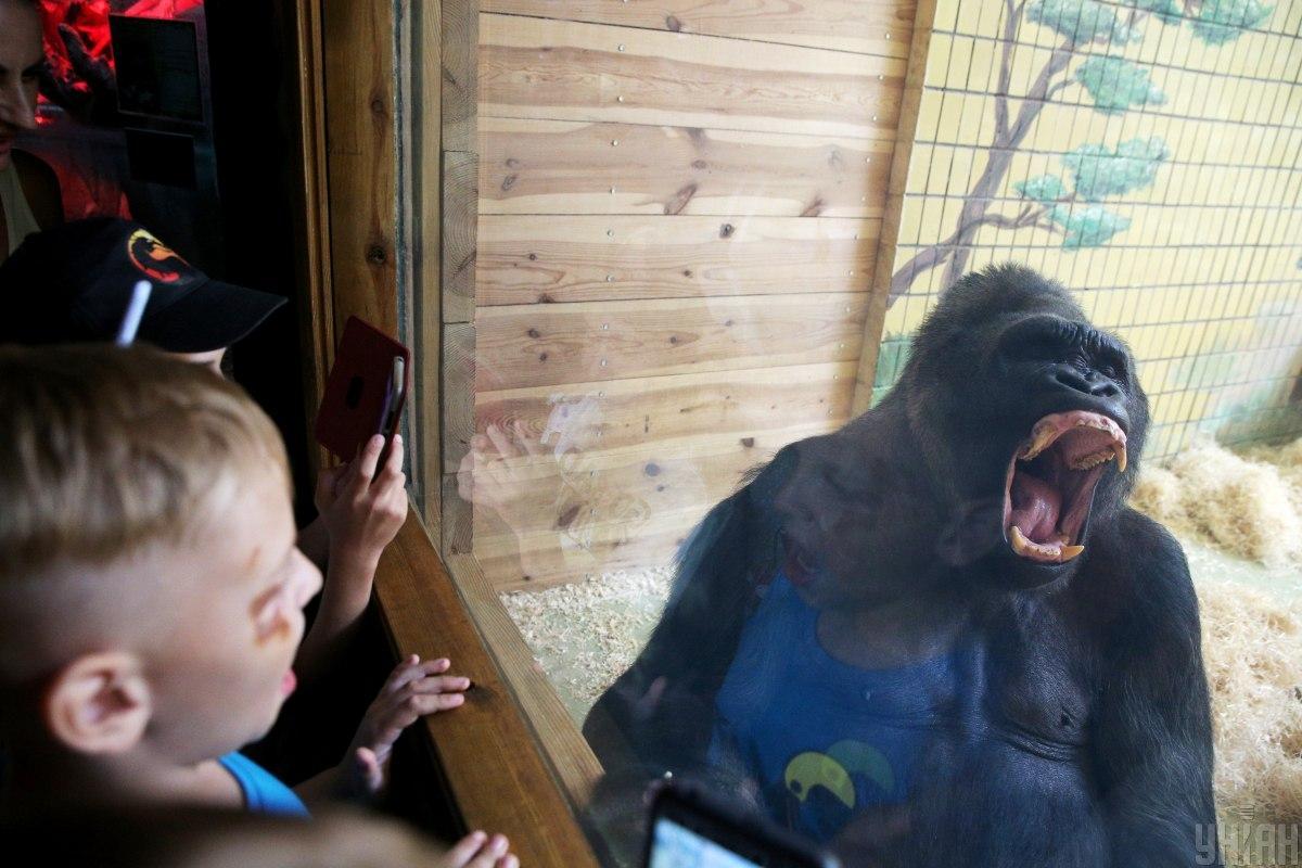 Тоні - улюбленець працівників і відвідувачів зоопарку / фото УНІАН