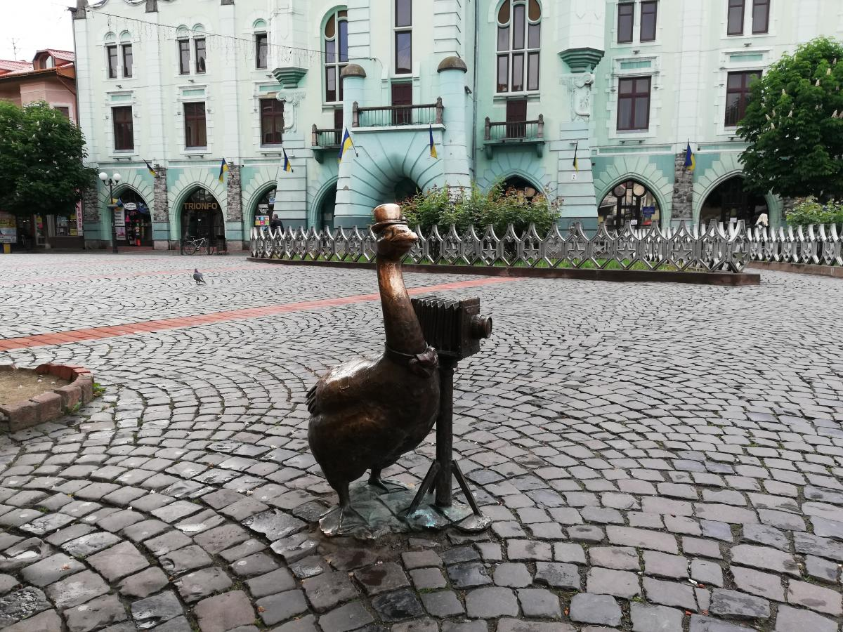 Гусак-фотограф в Мукачеві / Фото Марина Григоренко