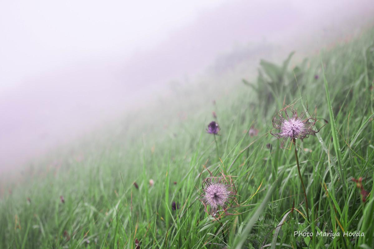 Туман дорогою на Говерлу / фото Mariya Hovda