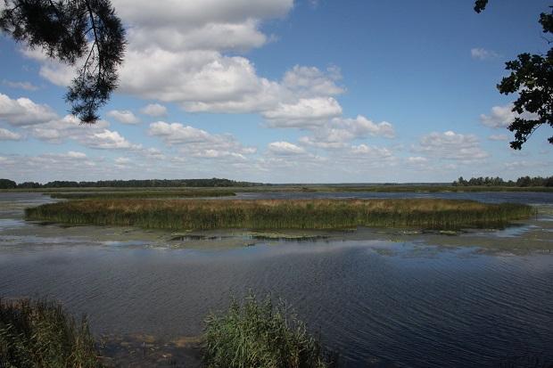Тривалий час територія Сухолуччя із соснових лісів, боліт, озер і заплав річок була закрита для громадськості / Фото прес-служби Мінекології
