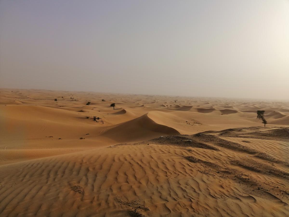 Пустыня примерно 80 км от Абу-Даби / Фото Нина Жильцова