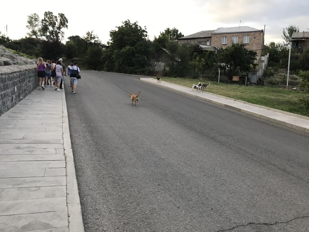 Собаки обороняют туристов от таксистов