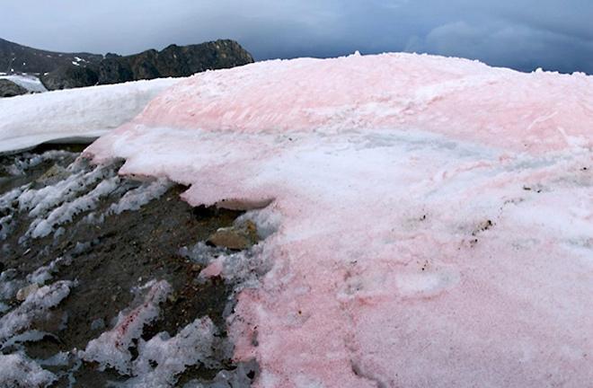 В каждом литре арктического снега ученые обнаружили пластик, следы лака и резиновых шин / Фото: GFZ