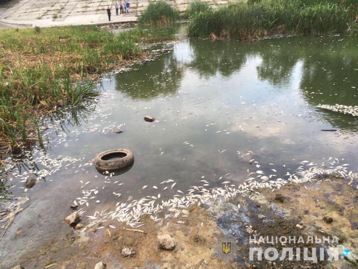 Полиция открыла уголовное производство по факту массовой гибели рыбы в Харькове / фото Нацполіція Харьковщины