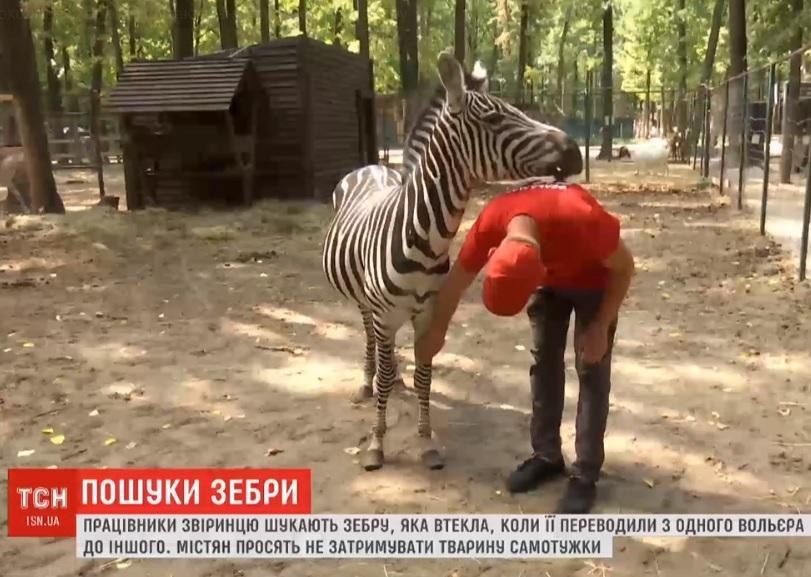 В Харькове ищут зебру, которая исчезла в лесу / Скриншот ТСН