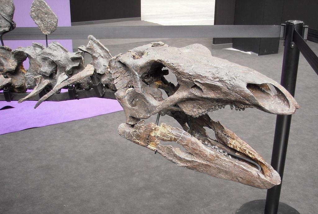 У Північній Африці рештки стегозаврів ніколи до цього не знаходили / фото: Вікіпедія