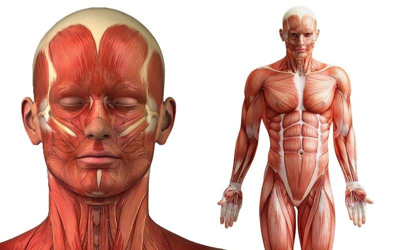Ученые считают, что нашли ключ к терапии против хронической боли / medikforum.ru